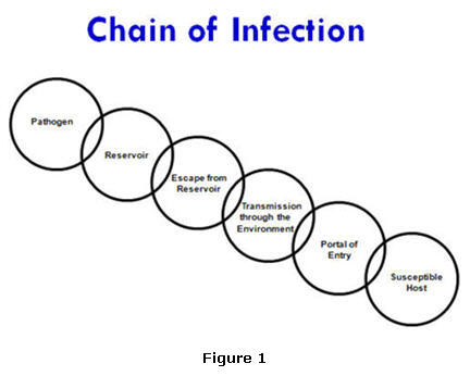 Infectious on fungi diagram